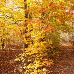 Fall Foliage – Blue Hills Reservation