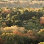 Fall foliage forest