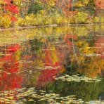 Fawn Lake Fall Foliage