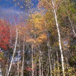 Fall Foliage Trees at Fawn Lake