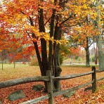 Fall Foliage (Minuteman National Historical Park)