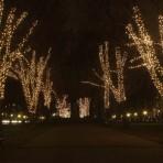 Downtown Boston – Christmas Decorations